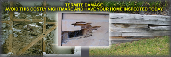 Termite Damage, Internal Wall, External Wall, Retaining Wall