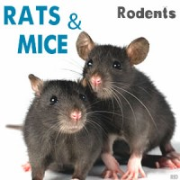 Rats, Mice, Rodents Control
