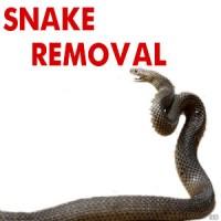 Snake Removal Ballarat, Emergency Response