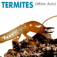 White Ants, Termites, Termite Treatment