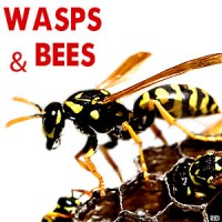 Wasps, Bees, Removed