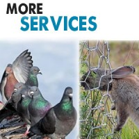 More Pest Services